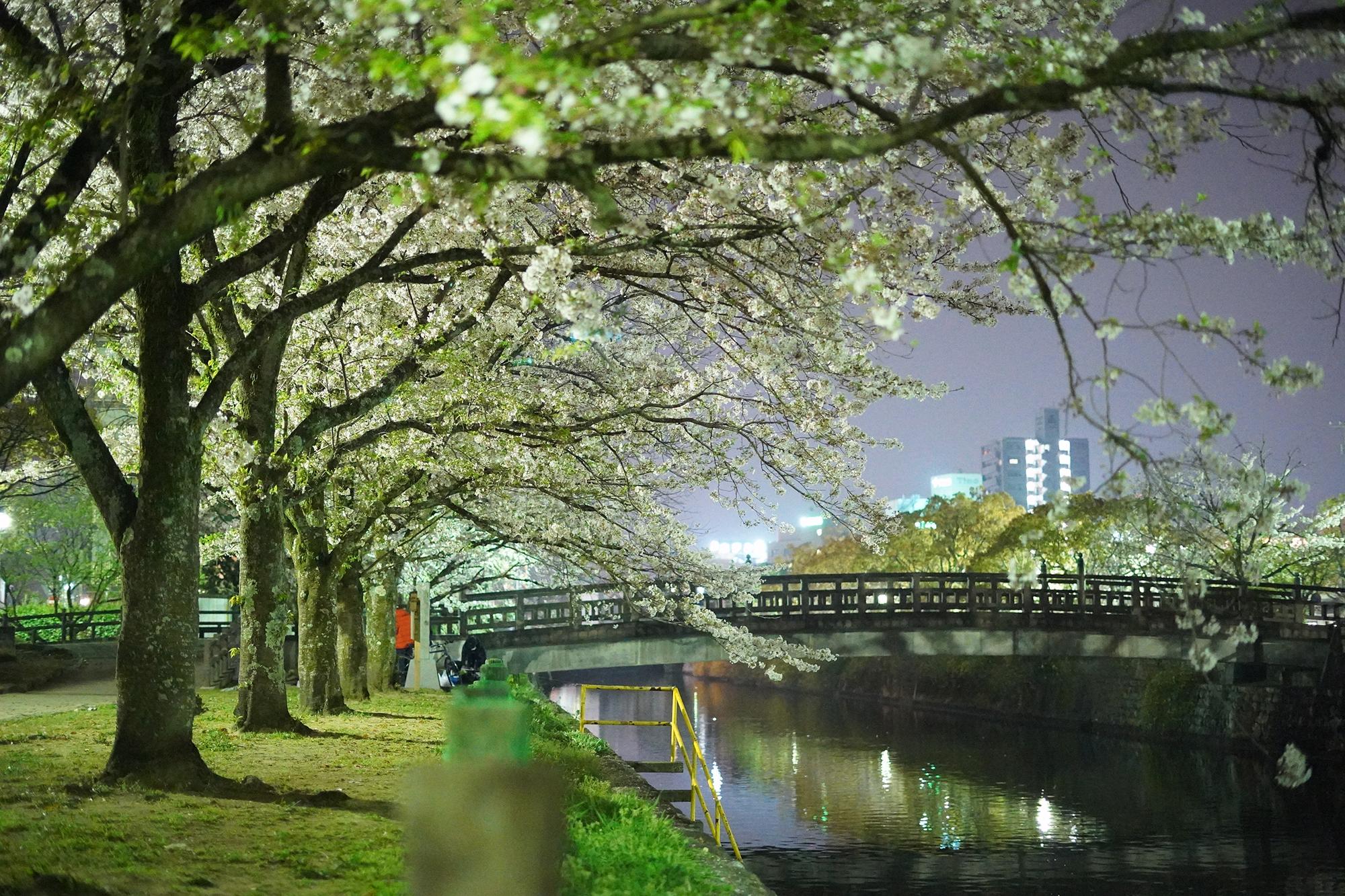 平成最後の夜桜撮影