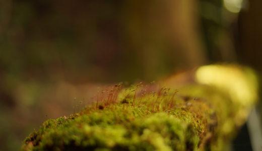 【撮影】甫喜ヶ峰森林公園で苔やなんかを撮って来た。