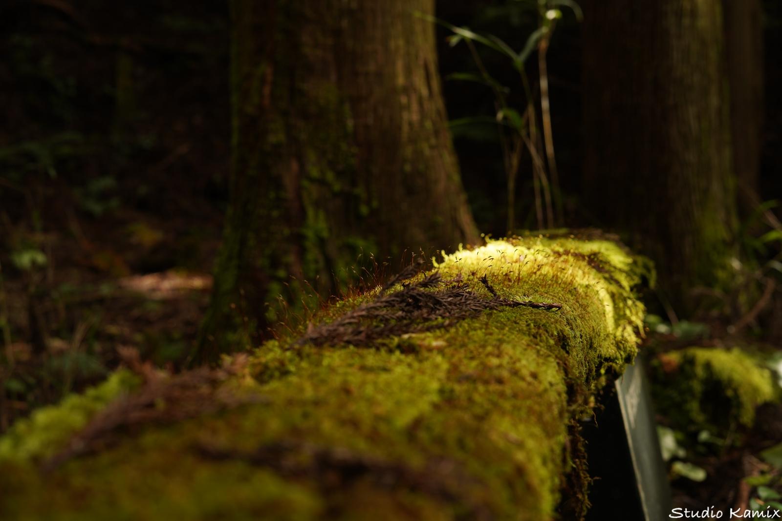 苔・森の中