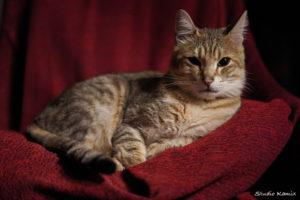王座の猫レオ