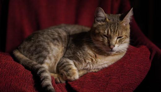 『深夜猫の肖像』〜愛機α7IIIの好きだったトコを想い出した。