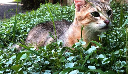 猫に咬まれて「ネコ」んだせいで、せっかくの連休を一日無駄にした件。