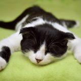 怠惰な猫〜昼寝〜寝相