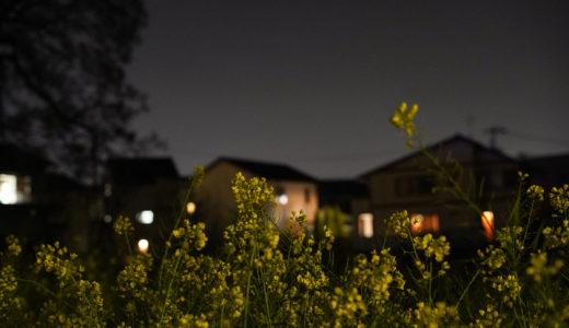 『消えゆく街に咲く菜の花』を夜間撮影してみました。