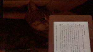 ベッド寝床で猫とKindle