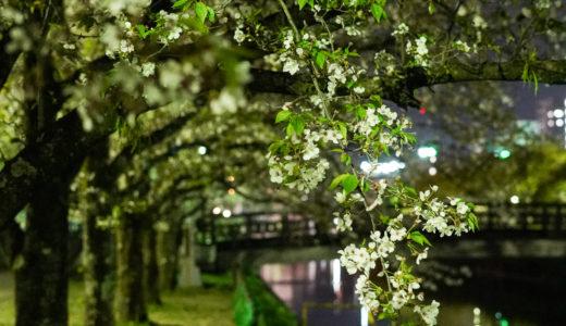 夜桜とスーパームーンに誘われて高知城のお城下、城西公園で久々の撮影。