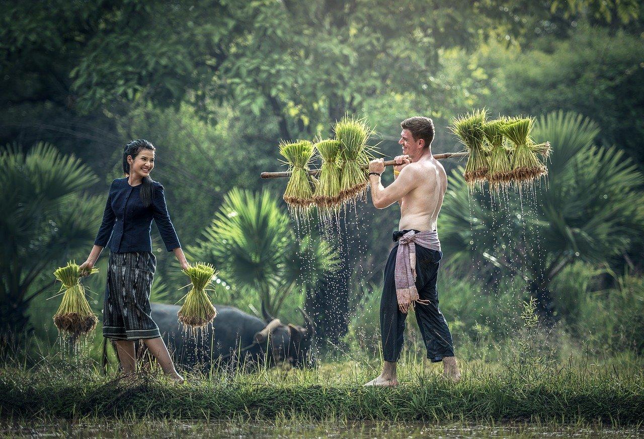 労働 農作業