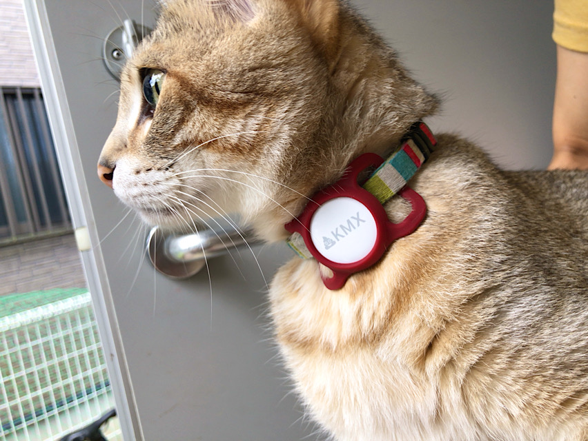 apple airtag with pet cat dog