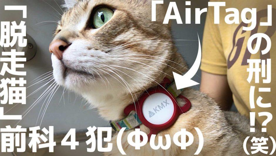 脱走猫 Apple AirTag