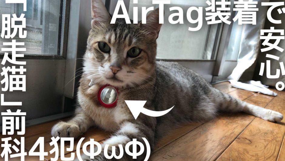 Apple AirTagをつけた脱走猫